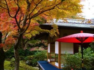 紅葉お茶室